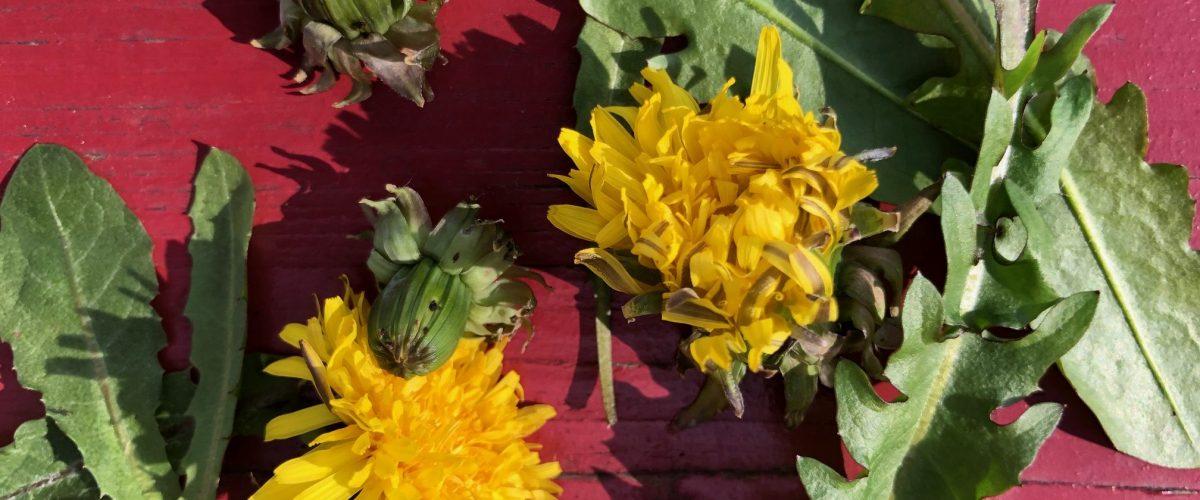 Frühling – die Zeit des HOLZ-Elements